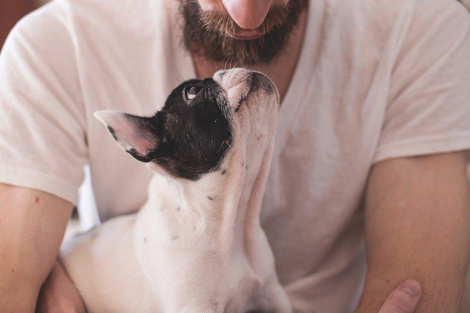 Vacunación perros en Madrid